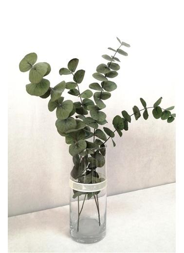 Kuru Çiçek Deposu Şoklanmis Büyük Yeşil Okaliptus Demeti Yeşil